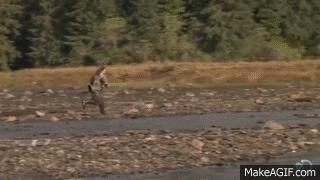 America, animalgifs, fishing, How to fish GIFs