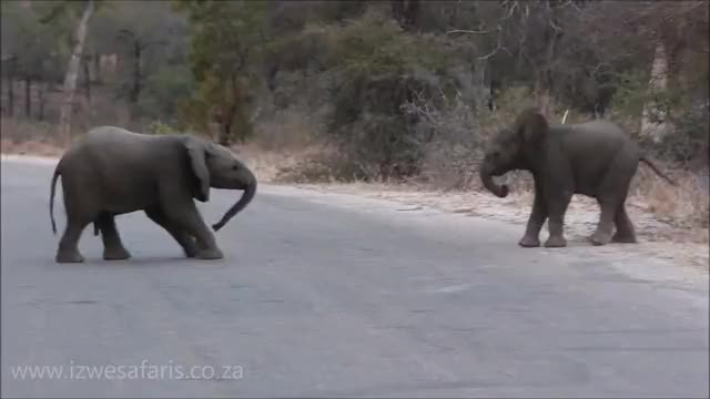 Watch and share Baby Elephants GIFs and Funny Animals GIFs by PM_ME_STEAM_K3YS on Gfycat