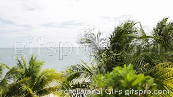 Watch and share Tropical Beach With Palm Trees Animated GIF GIFs on Gfycat