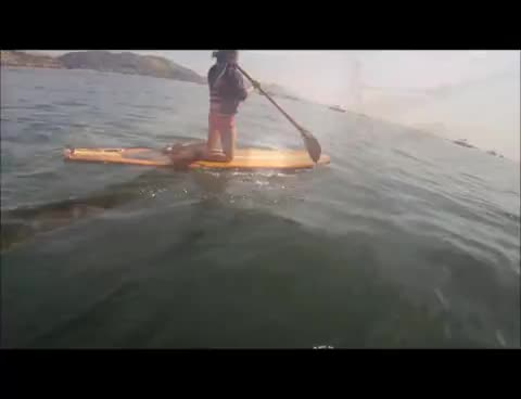 blah, surfing, surfing GIFs