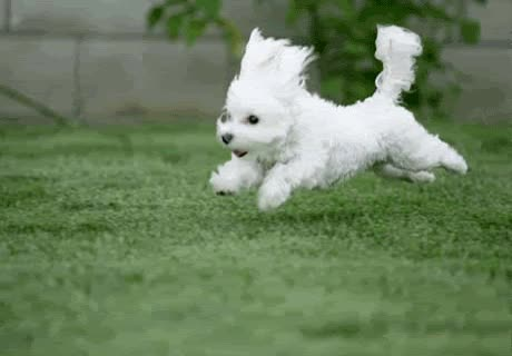 Watch and share Puppy-running GIFs on Gfycat