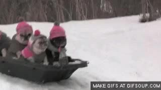 Watch Canadian canoe : gifs GIF on Gfycat. Discover more related GIFs on Gfycat