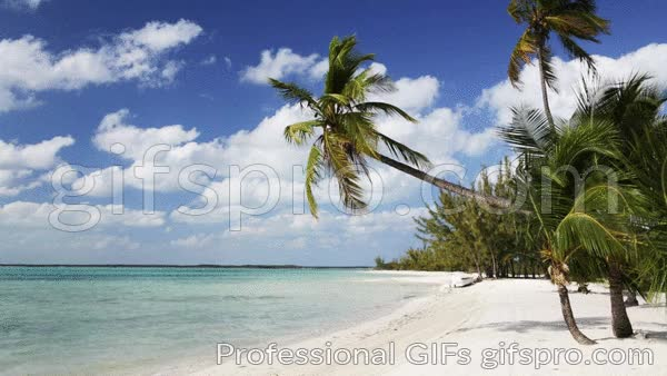 Watch and share Tropical Beach With Palm Trees And Boat Animated GIF GIFs on Gfycat