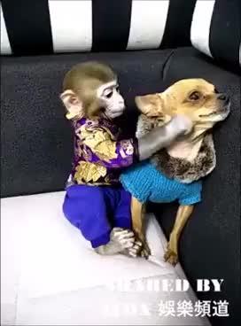 Watch and share Macaco Fazendo Carinho No Cachorro Muito Engraçado GIFs on Gfycat