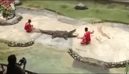 Watch giving crocodile some head... GIF on Gfycat. Discover more related GIFs on Gfycat