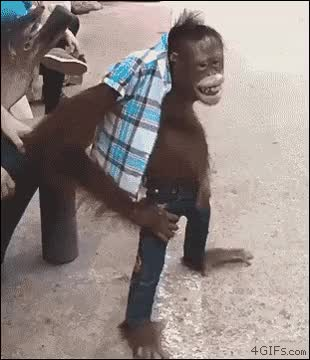Watch Smiling orangutan GIF on Gfycat. Discover more related GIFs on Gfycat