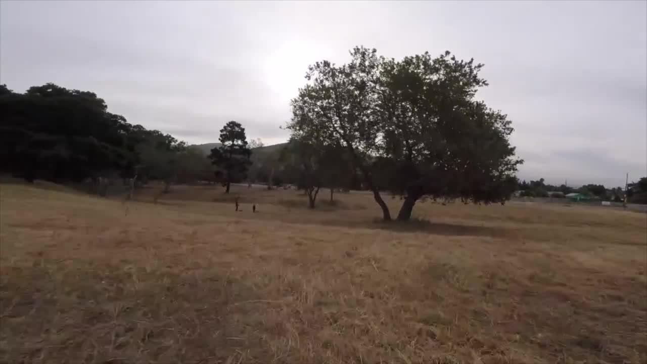 fpv, multicopter, Tree gap GIFs