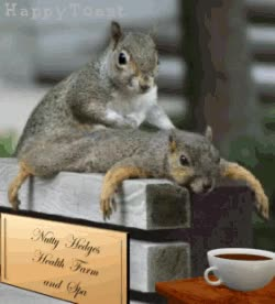 Watch and share Squirrels GIFs and Squirrel GIFs on Gfycat