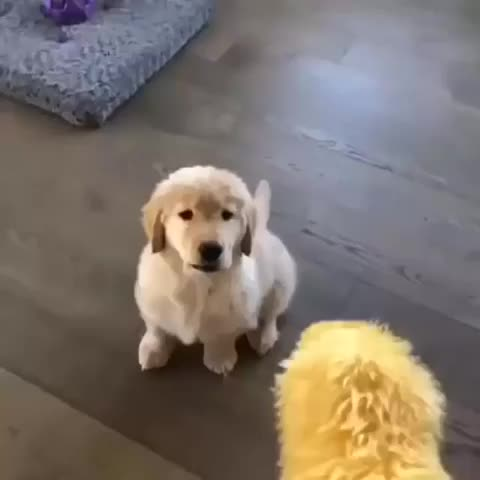 Pupper doing a miscatch GIFs