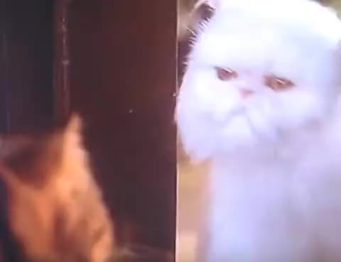 Watch Cats And Dogs! I Want You To Stay Here! GIF on Gfycat. Discover more Dog, Toad, because, best, bit, cat, cool, funny, hate, here, laugh, lol, mr, stay, stuff, tinkles, very, want, wet, you GIFs on Gfycat