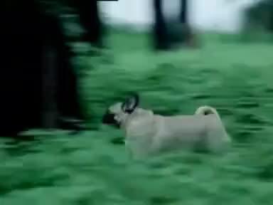 Hutch Dog