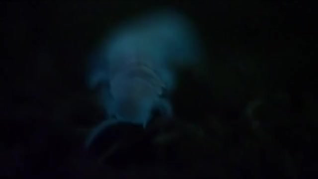 Watch and share Bioluminescent Millipede (Motyxia) GIFs on Gfycat