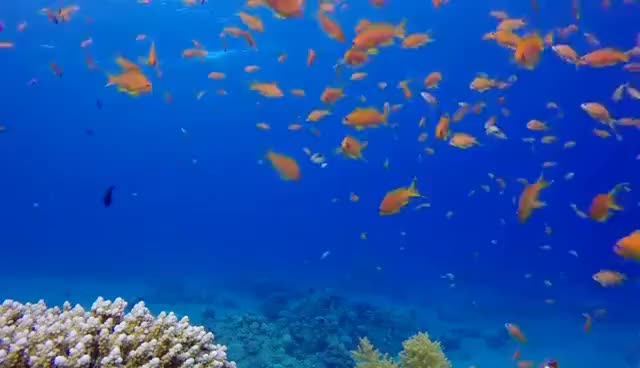 Watch and share Coral Reef Aquarium & The Best Relax Music - 2 Hours - Sleep Music - HD 1080P GIFs on Gfycat