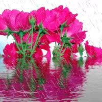 Watch and share Animated Flowers GIFs on Gfycat