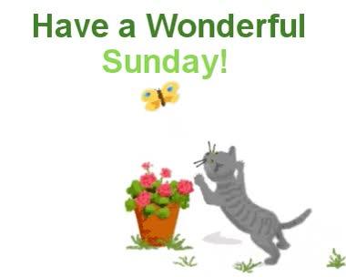Watch and share Sunday GIFs on Gfycat