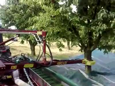 Watch and share Cherryharvesting GIFs on Gfycat