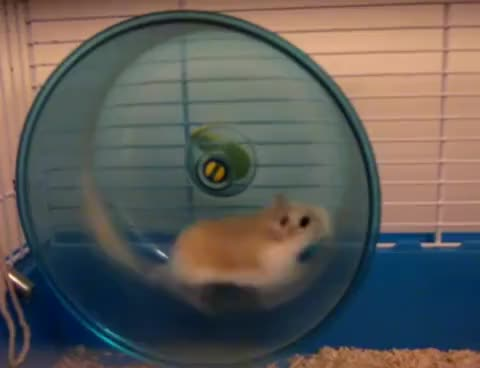 Watch and share Server Hamster GIFs on Gfycat