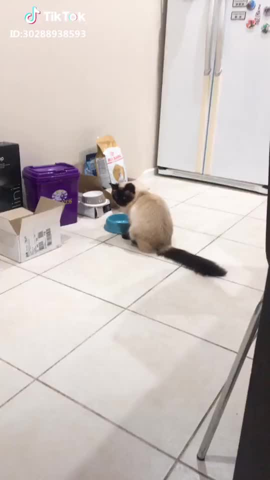 Watch and share Funnyanimal GIFs and Cutcat GIFs by interesting on Gfycat