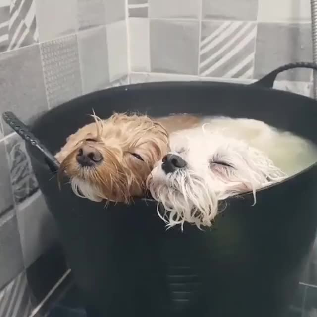Watch and share Bathtime Bliss GIFs by likkaon on Gfycat