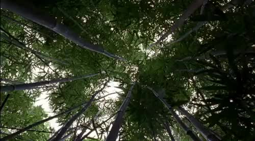 Watch and share Trees (reddit) GIFs on Gfycat