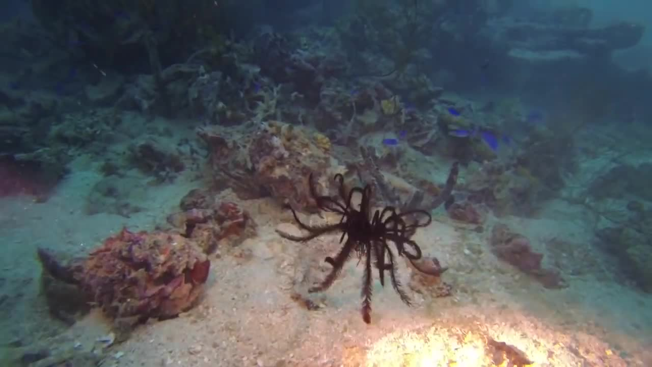 Feather star GIFs