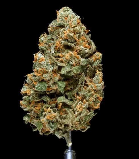 Watch and share Grow Marijuana GIFs on Gfycat