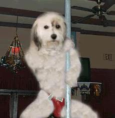 Watch and share Pole Photo: Duncan The Pole Dancer Duncanpoledancer.gif GIFs on Gfycat