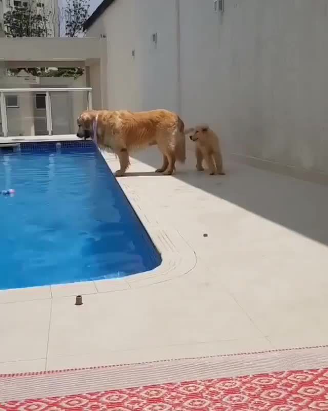 Watch and share Doggiestyle GIFs and Puppypower GIFs by PM_ME_STEAM_K3YS on Gfycat