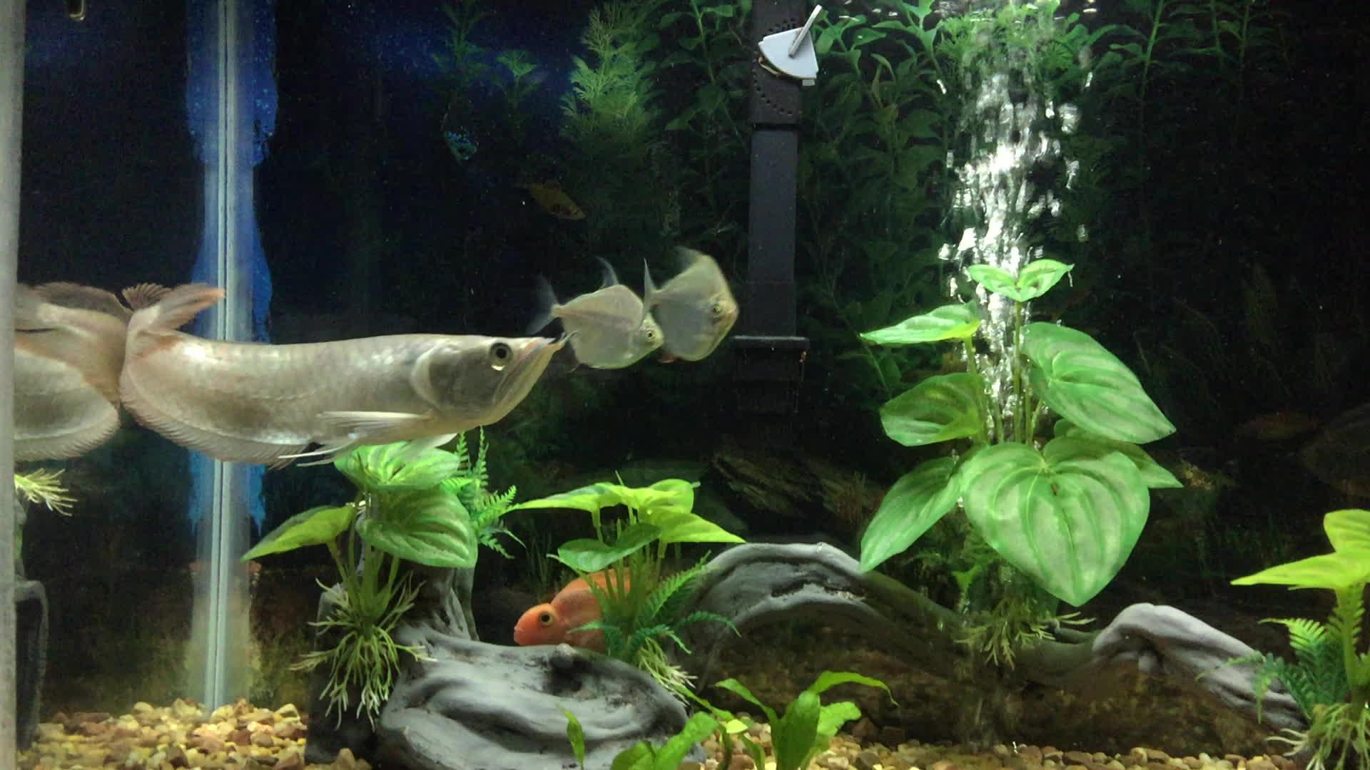 Aquarium gif