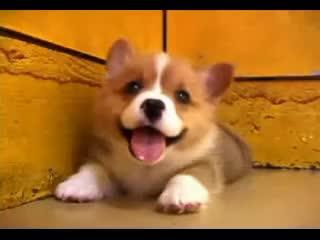 cute, dog, aww GIFs