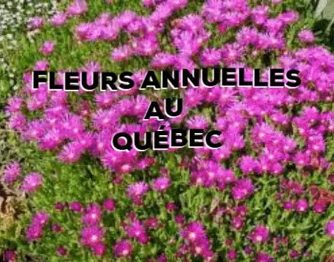 Watch and share Fleurs Annnurlles Au Quebec GIFs on Gfycat