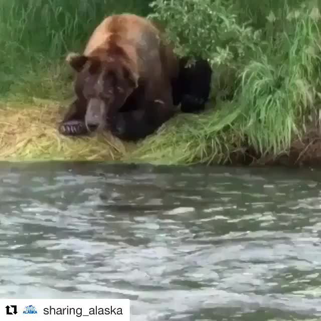 Watch and share Nature GIFs by Jackson3OH3 on Gfycat