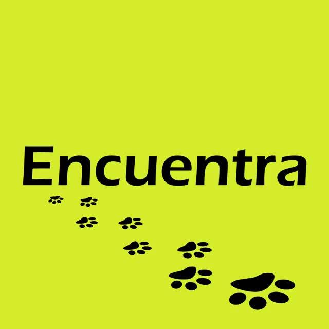 Watch and share TIENDA CANINA CANES LOJA Licencia MRCreativa GIFs by Mario Morocho Riofrio on Gfycat