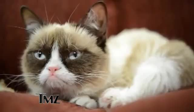 Watch this grumpy cat GIF on Gfycat. Discover more cat, grumpy, grumpy cat GIFs on Gfycat