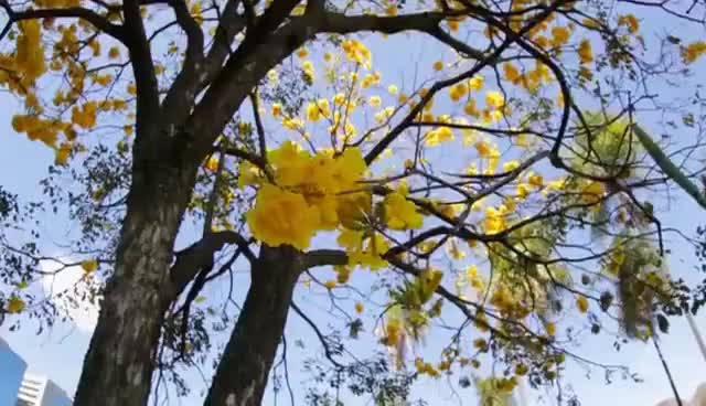 Watch and share Floresta De Ipês - Momento Ambiental GIFs on Gfycat