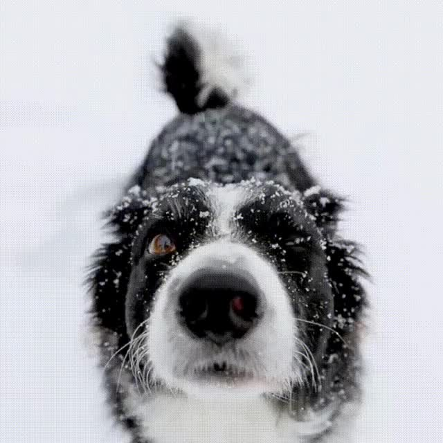 Watch and share Stop And Enjoy The Snow GIFs on Gfycat