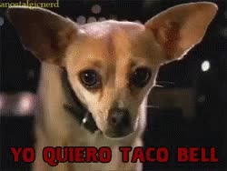 Watch and share Taco Bell GIFs on Gfycat