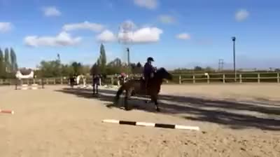 Watch Me Jumping Josie 2 GIF on Gfycat. Discover more horse GIFs on Gfycat