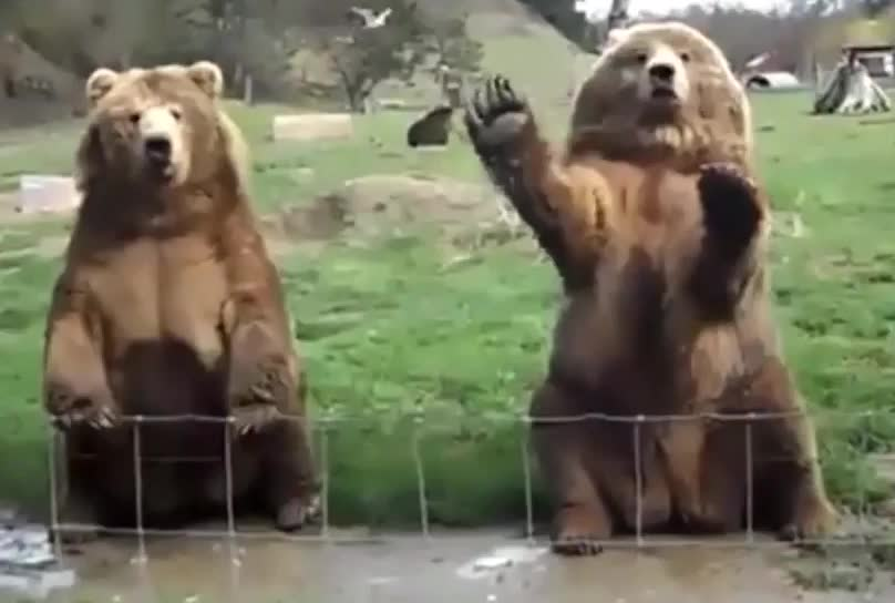 bye, goodbye, greeting, hello, hi, two bears waving GIFs