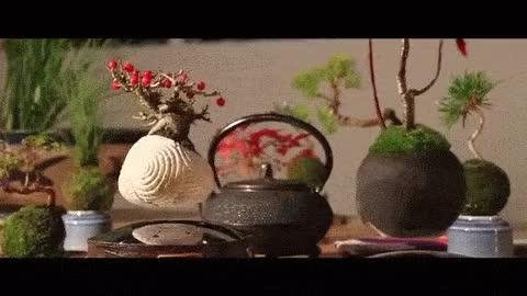 Watch and share Air Bonsai GIFs on Gfycat