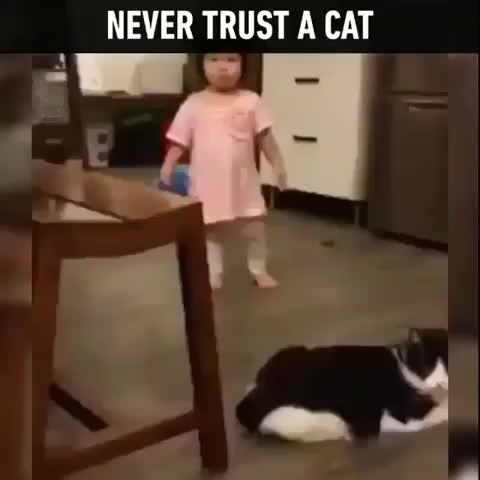 #cat, Never trust. GIFs