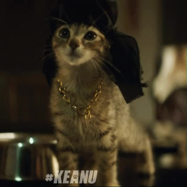 Watch Keanu Movie GIF on Gfycat. Discover more related GIFs on Gfycat
