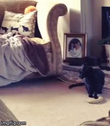 animalsbeingjerks, Get your fucking banana off MY FLOOR!!! (reddit) GIFs