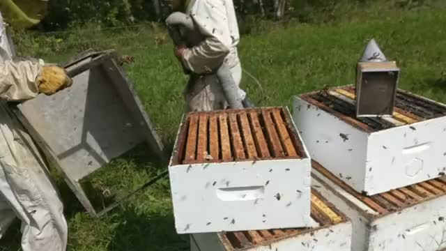 Watch this bees GIF on Gfycat. Discover more bees, honey GIFs on Gfycat