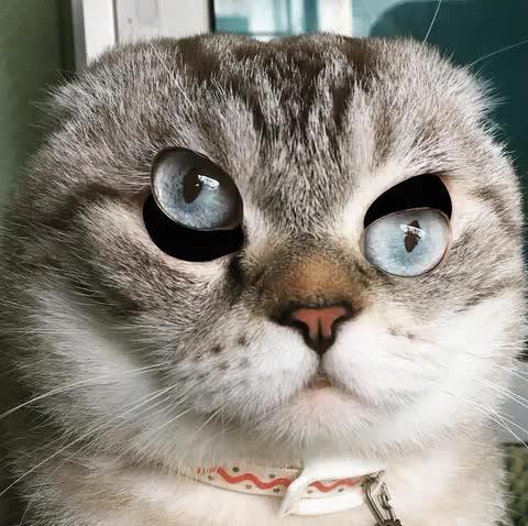 Cat eye gifgame