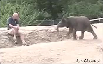 Watch and share Zoo GIFs on Gfycat