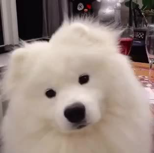 confused, dog, ha, not, pet, sure, think, wait, what, wonder, Confused dog GIFs