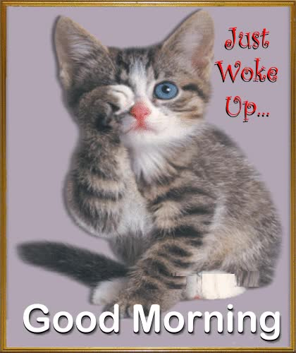 Watch and share Wish Your Tired Loved Ones A Relaxed #Caturday With This Cute #ecard. #happyweekend GIFs on Gfycat