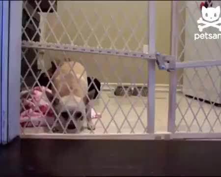 Dog getting through gate GIFs