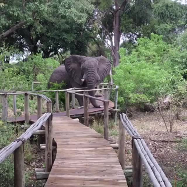 Watch Elephants always have the right of way GIF by tothetenthpower (@tothetenthpower) on Gfycat. Discover more nature GIFs on Gfycat